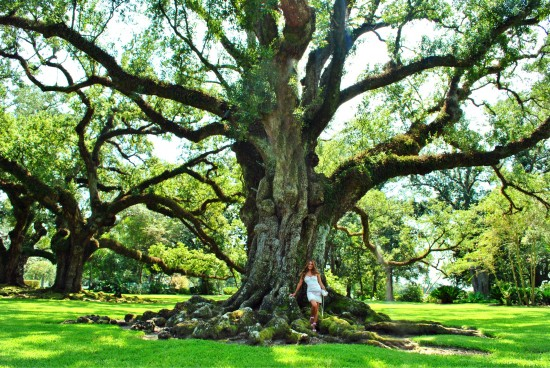 Southern charm- Oak Alley Plantation
