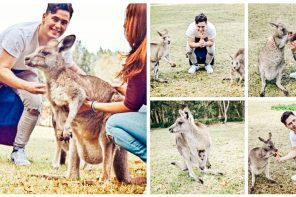 Meeting Kangaroos In Morisset Park, New South Wales