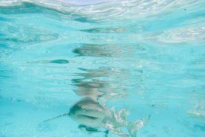 Snorkeling In Bora Bora´s Coral Reef